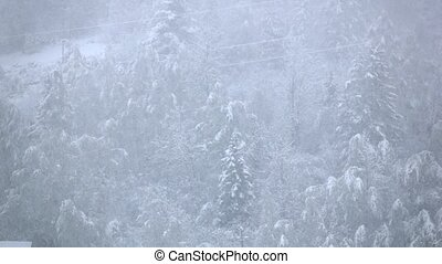 Snowfall in winter forest with snowy pines in slow motion,...