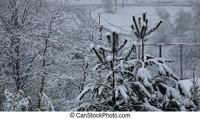 Snowfall calmly falls on branches of trees. Winter, slow...