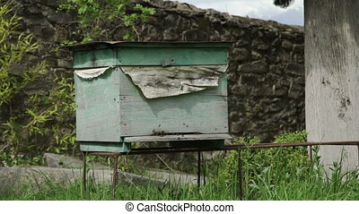 Bees go in and out in the hive - Antique georgian monastery...