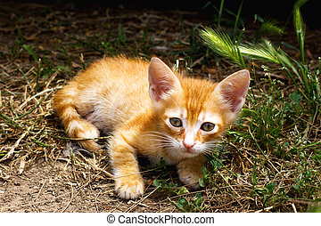 Little cute red kitten with big eyes in green grass