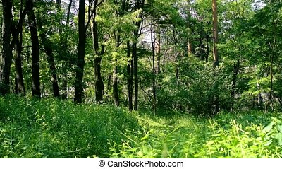 Lush green mixed forest in summer