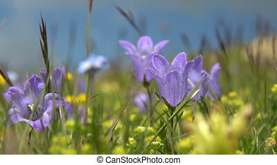 Beautiful flowers blue bells in green grass