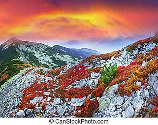 Autumn colors in the Carpathians - Paints fantastic fall in...