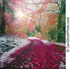 first snow in the autumn - Autumn in Transcarpathia...