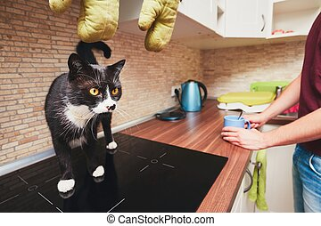 Life with cat - Life with domestic animals. Man with curious...