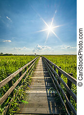 Wooden pavement in Narew National Park - Narew National Park...
