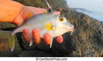 Amateur fishing in India 6. This triggerfish caught on clam...