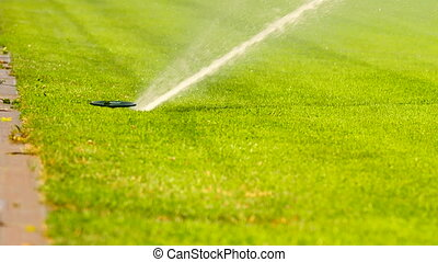 Lawn grass on the football field sprinkles water in summer....