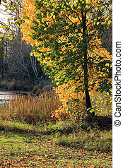 Autumn colors. - Autumn colors and changing season in a...