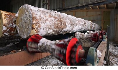 Conveyor with logs in cutting machine, lumber mill -...