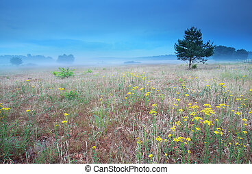arnica flowers on hill in morning