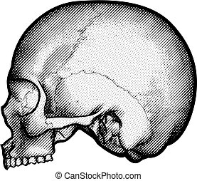 Skull Vintage Retro Etched Engraved Style