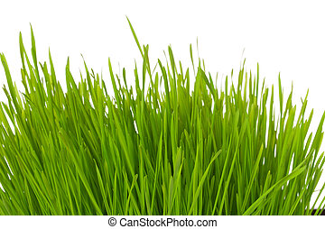 Tuft of grass - A closeup view on a tuft of green grass...