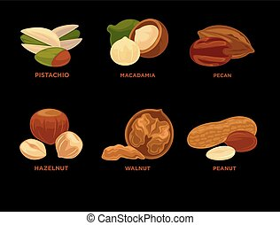Nut set. Ripe nuts and seeds vector illustration. Various...