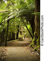 Lush pathway through the forest