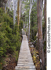 Board walk heading off into a forest and up an incline
