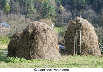 Dry grass fodder in haystacks - Dry grass, fodder haystacks...