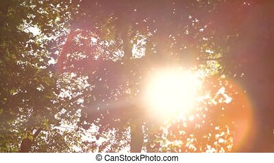 Foliage and bright sun. Tree branches and leaves. Follow...