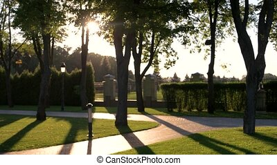 Park and sun. Trees, shrubs and alley. Most beautiful places...