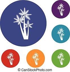 Three tropical palm trees icons set