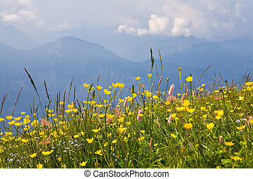 Alpe during summer - Alpine flowers on a background alpe