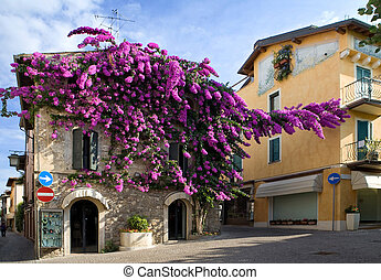 Center Sirmione. Facade of house twined about a lilac bush