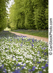 Stunning conceptual fresh Spring landscape image of bluebell...