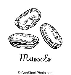 Mussels ink sketch. Isolated on white background. Hand drawn...