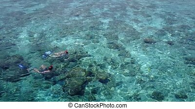 v04061 Aerial flying drone view of Maldives white sandy beach 2 people young couple man woman snorkeling swimming diving on sunny tropical paradise island with aqua blue sky sea water ocean 4k