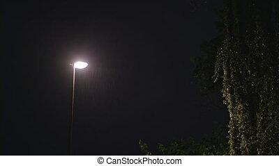 Rainy Night. Solitary Lamppost and a Wet Tree - Rainy night....