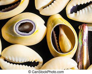 Sea Shell - Texture Limestone Sea Shells on a Black...