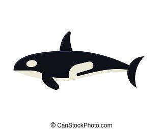 Killer Orca Whale Vector Illustration
