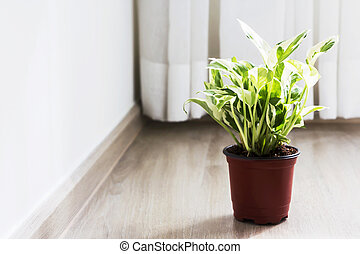 Home and garden decoration of golden pothos in the bedroom
