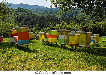 Bee hives in the forest - Wooden beehives in the forests of...