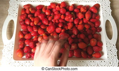 Bright red ripe strawberries and human hand. A tray and a...