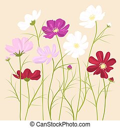 vector floral background -  cosmos flowers