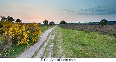 Sunset over Heathland near Hilversum - Sunset over...