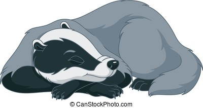 Badger sleeping on a white background.