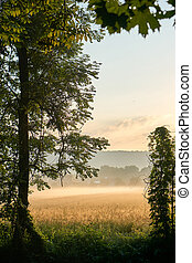 Sunrise over a grainfield with fog. Vivid colors with dramatic clouds. Bayreuth, Germany. Vertical.