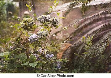 vendimia,  Overgrown, jardín, foto