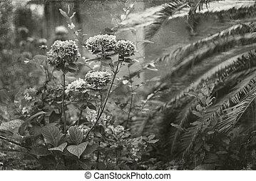 vendimia,  Overgrown,  toned, jardín, foto