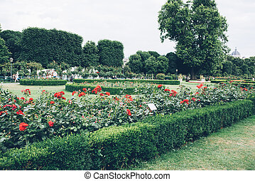 flowering roses flower beds, well-groomed garden - Beautiful...