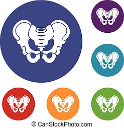 Pelvis icons set in flat circle reb, blue and green color...