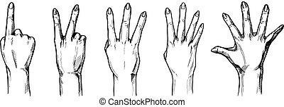 Counting with fingers hands 1,2,3,4,5 - Vector illustration...