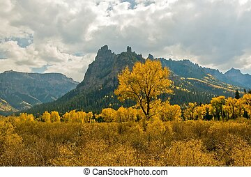 Fall Cottonwood - Cottonwood with bright autumn foliage in...