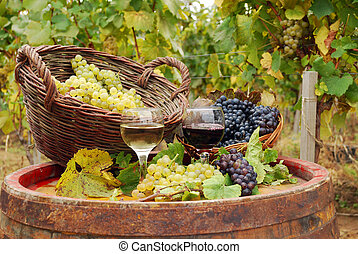 vineyard with red and white wine