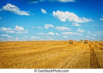 field of wheat after harvesting