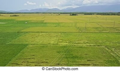 Drone Flight over Green Endless Beautiful Rice Fields -...