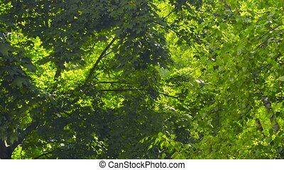 Leaves of trees - on a sunny summer day - Leaves of trees -...