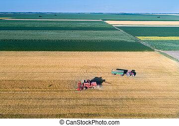 trigo, cosecha, Verano